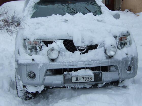 Schneekönig